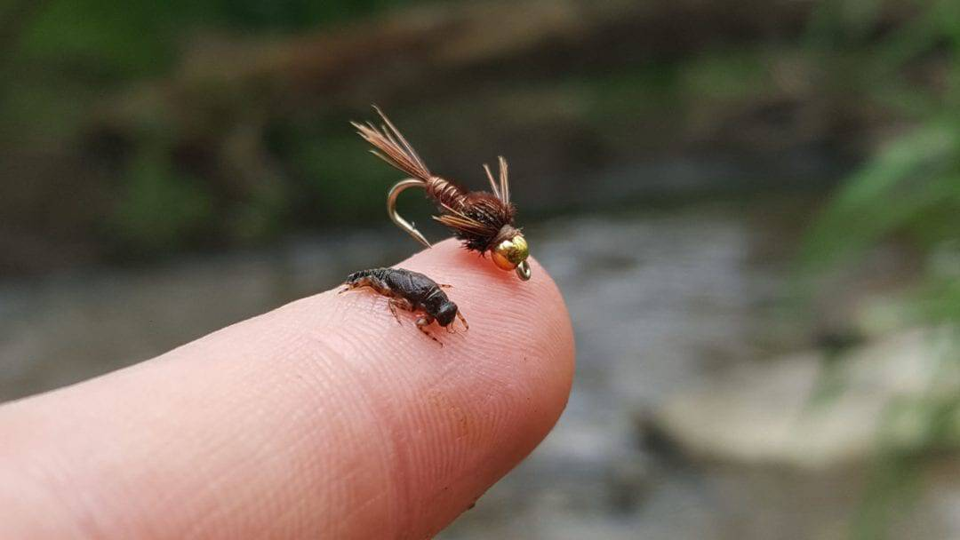 comparing nymph sizes, picking the right size fly, fly fishing choosing the right size, how to pick a fly, how to fly fish, beginner fly fishing tips